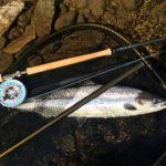 Salmon Fishing fish